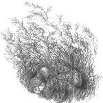 illustrations-viking-blood-secrets-forlaget-mari-21